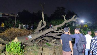 आरे में जारी रहेगी पेड़ों की कटाई, बॉम्बे हाईकोर्ट ने रोक लगाने से किया इनकार- 29 पर्यावरण प्रेमियों को नहीं दी जमानत