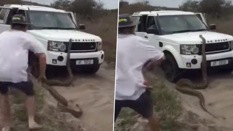 साउथ अफ्रीका: 17 फुट लंबे अजगर ने टूरिस्ट का किया पीछा, चढ़ा गाड़ी की बोनट पर, देखें वायरल वीडियो