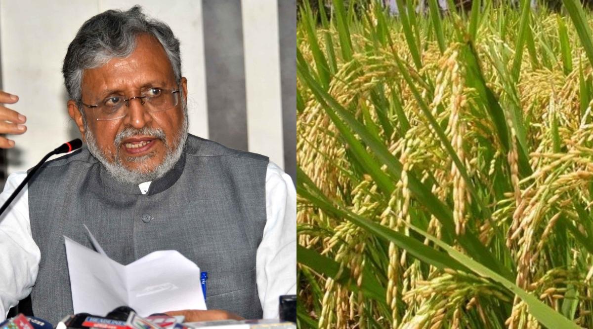 बिहार: उपमुख्यमंत्री सुशील कुमार मोदी ने कहा- नमीयुक्त धानों को सुखाकर खरीदेगी सरकार, 15 नवंबर से होगी खरीददारी