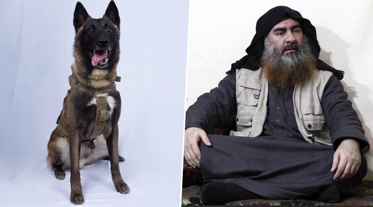 अबु बक्र अल-बगदादी को मौत के घाट उतारने में इस कुत्ते ने निभाया था बड़ा रोल, अमेरिका के प्रेसिडेंट ट्रंप ने ट्वीट कर कही ये बात