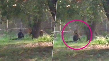 VIDEO: दिल्ली के चिड़ियाघर में शख्स ने बाड़े में कूदकर शेर को दिखाया टशन, आगे हुआ ये...
