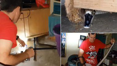 घर में टेबल के नीचे छिपकर बैठा था दुनिया का सबसे खतरनाक ब्लैक माम्बा सांप, वीडियो देखकर हो जाएंगे हैरान