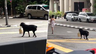 ये कुत्ता है लड़की का बॉडीगार्ड, पर्स लेकर चलता है पीछे पीछे, देखें वायरल वीडियो