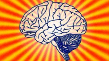 भारतीयों के दिमाग का आकार पश्चिमी-पूर्वी देशों की तुलना में है छोटा, मानव मस्तिष्क को लेकर अध्ययन में चौंकाने वाला खुलासा