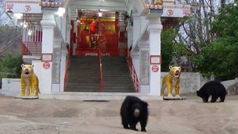 Navratri 2019: देवी चंडी के इस मंदिर में दर्शन के लिए आता है भालू का पूरा परिवार, आरती के बाद प्रसाद लेकर लौट जाते हैं वापस