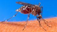 Uttar Pradesh: मेरठ में पैर पसार रहा है डेंगू, बढ़ रहे है मामले