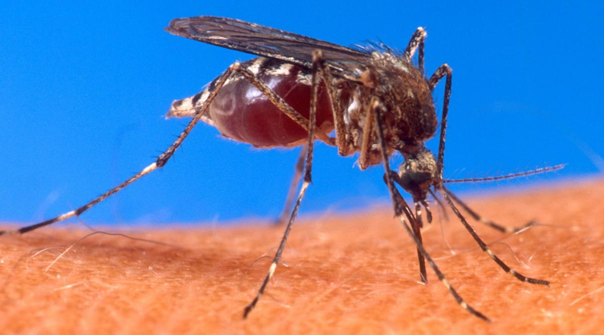 स्पेन: सेक्स से डेंगू फैलने का पहला मामला आया सामने, टेस्ट में हुआ खुलासा