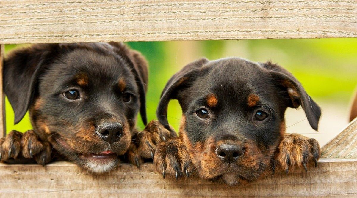 World Animal Day 2019: जानवरों के प्रति जागरुकता का दिन है विश्व पशु दिवस, जानिए इसका इतिहास और महत्व