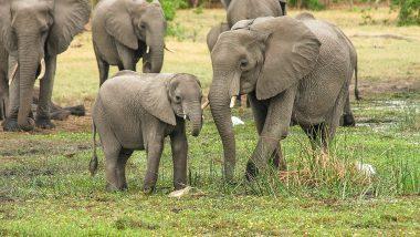मध्यप्रदेश: जंगली हाथियों ने मचाया आतंक, चार दिन में दो की मौत, सिंगरौली जिले में दशहत का माहौल