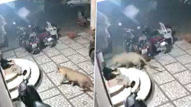 नाशिक: दबे पांव घर में घुस आया तेंदुआ और कर दिया अटैक, उसके बाद जो हुआ..देखें वायरल वीडियो