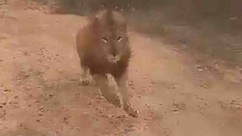 कर्नाटक: जब अटल बिहारी वाजपेयी प्राणी उद्यान में सफारी राइड के दौरान गाड़ी के पीछे दौड़ने लगा शेर, देखें वीडियो