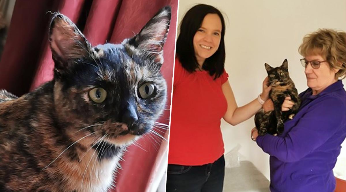 ब्रिटेन: 9 महीने की बिल्ली के साथ बेरहमी से मारपीट और बलात्कार, अस्पताल में भर्ती, देखें हैरान कर देनेवाली तस्वीरें