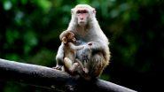 Monkey Viral Video: इंसानों की तरह कपड़े धोता हुआ दिखाई दिया बंदर, वीडियो देख नहीं रोक पाएंगे हंसी