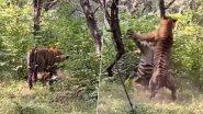 रणथंभौर के नैशनल पार्क में दो बाघों ने की बाघिन के चक्कर में लड़ाई,  देखें हिंसक वीडियो