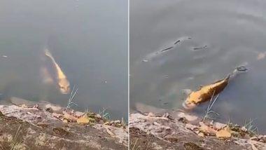 चीन की झील में तैरती हुई दिखी इंसानी चेहरे वाली मछली, देखें वायरल वीडियो