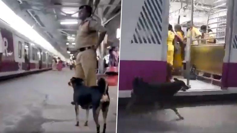 लोगों को भौंककर रेलवे ट्रैक पार करने से रोकता है ये आवारा कुत्ता, देखें वायरल वीडियो
