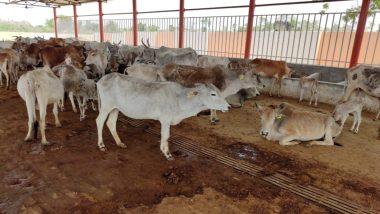 उत्तर प्रदेश: अतर्रा की सरकारी गौशाला में 4 दिनों में 13 गायों की हुई मौत