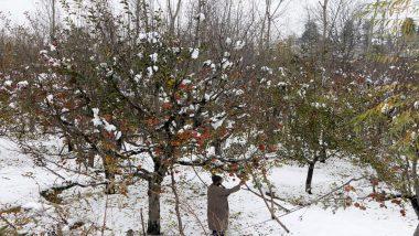 जम्मू-कश्मीर: भारी बर्फबारी से के कारण सेब के बागों को हो रहा नुकसान, आम जनजीवन प्रभावित