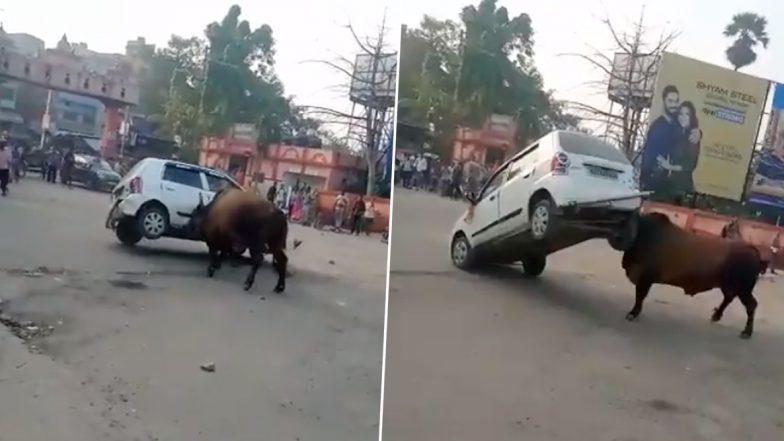 बिहार: हाजीपुर में हॉर्न बजने से गुस्साया सांड, पटक दी कार, देखें वायरल वीडियो
