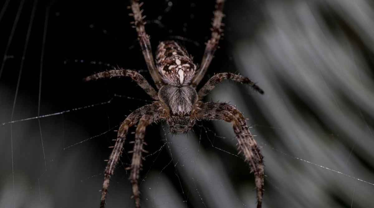 गुजरात: ध्रुव प्रजापति ने किया दो नई प्रजाति की मकड़ियों का नामकरण, सचिन तेंदुलकर पर रखा गया है पहली मकड़ी का नाम