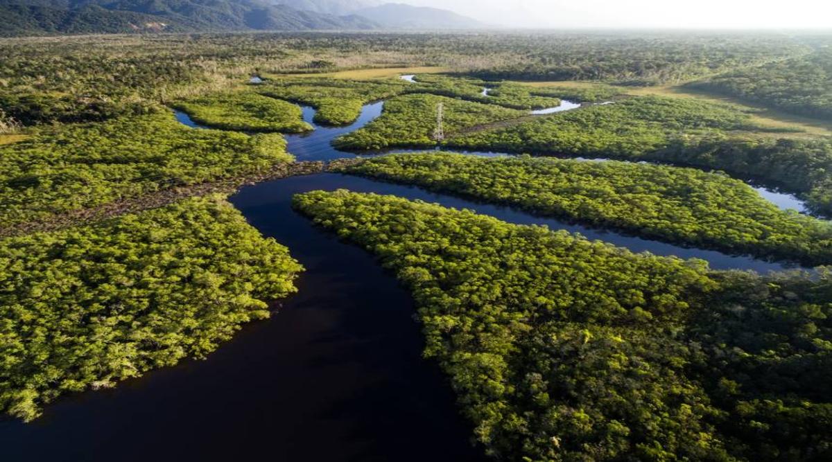 ब्राजील के अमेजन जंगलों में पेड़ों के सफाए ने तोड़ा एक दशक का रिकॉर्ड, 43 फीसदी तक बढ़ गया पेड़ों का सफाया
