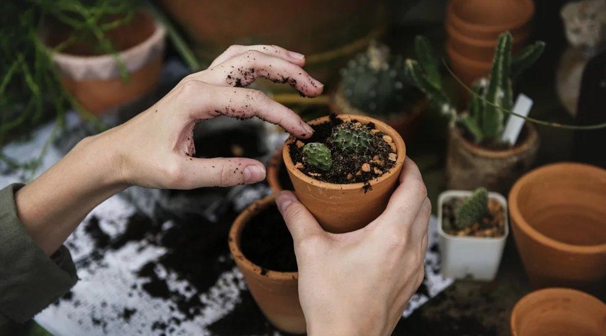 इन 5 पौधों को लगाना माना जाता है बेहद शुभ, धनलाभ के साथ घर में होता है सुख-समुद्धि का वास