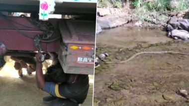 ओडिशा: कालाहांडी जिले में 8 फुट लंबा अजगर ट्रक के नीचे लिपटा हुआ पाया गया