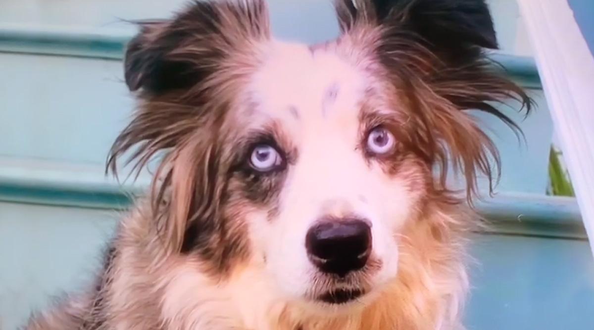 महिला ने अपने चोरी हुए कुत्ते को ढूंढने के लिए हायर किया प्लेन और रखा $ 7000 का इनाम