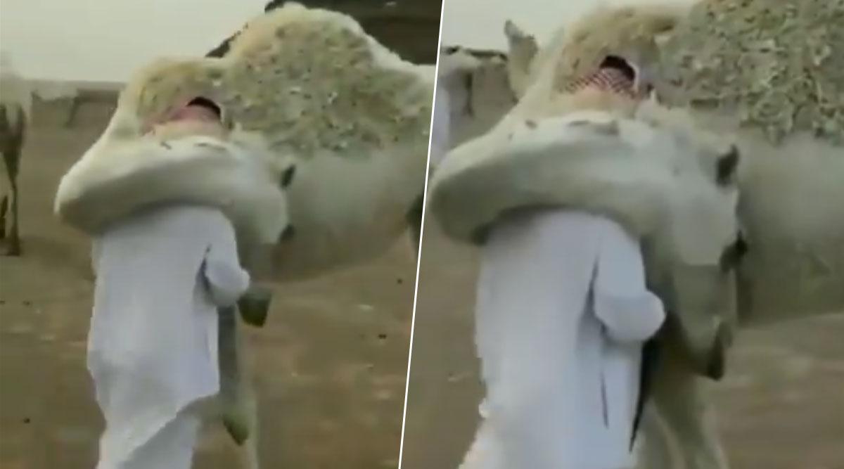 काफी दिनों से बाहर गए हुए मालिक को वापस देखकर ऊंट उससे लिपटा, देखें इमोशनल वीडियो