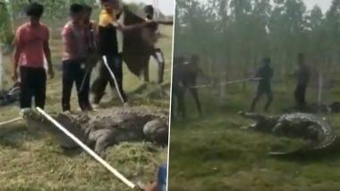 गुजरात: वड़ोदरा के गांव के खेत में मिला 12 फीट लंबा मगरमच्छ, फ़ॉरेस्ट डिपार्टमेंट ने सुरक्षित निकाला, देखें वायरल वीडियो