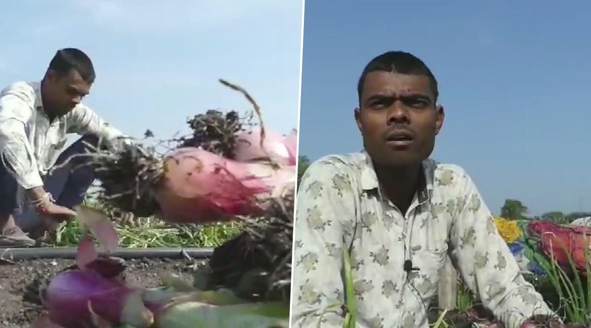 अजब मध्यप्रदेश की गजब कहानी: खेत से 30 हजार रुपये के प्याज की खड़ी फसल उखाड़ ले भागे चोर