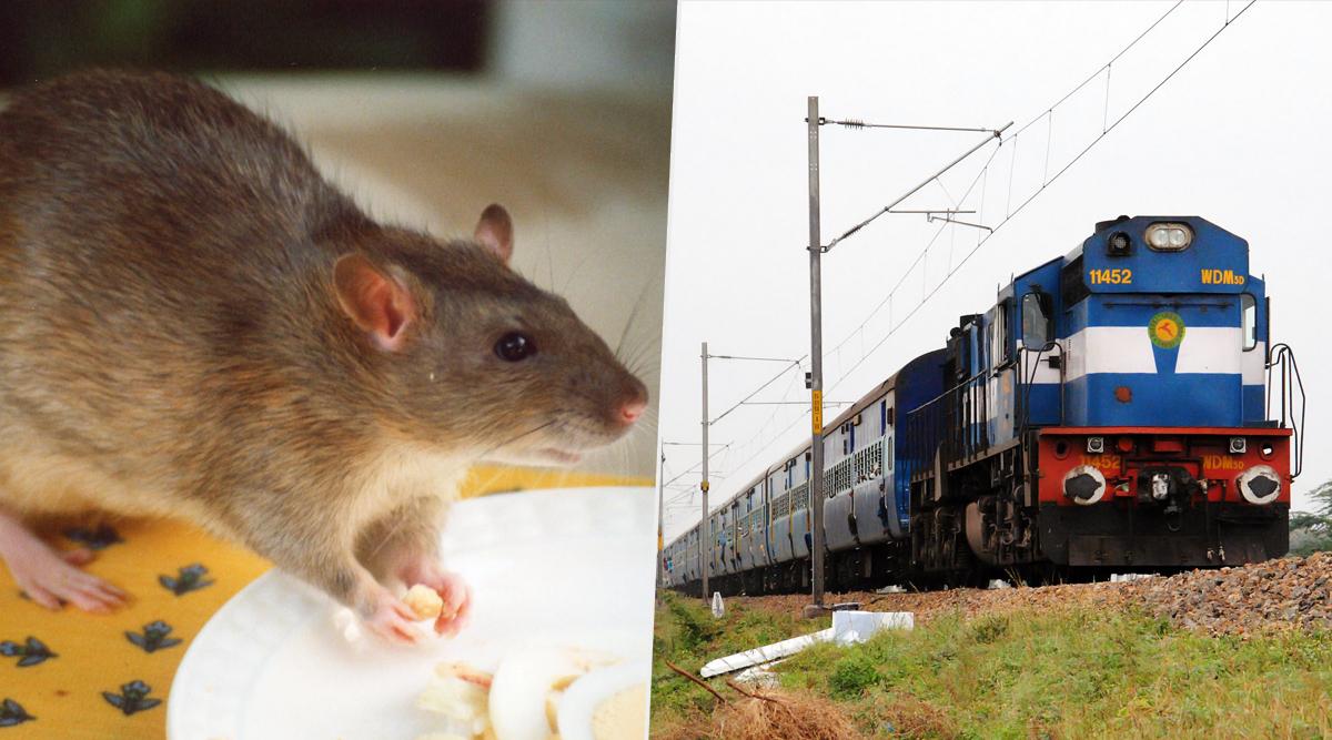 रेलवे ने 5457 चूहे मारने के लिए खर्च किए डेढ़ करोड़ रुपये, RTI में हुआ खुलासा