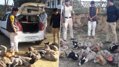 त्रिपुरा-मिजोरम सीमा पर पुलिस ने 12 आवारा कुत्तों के साथ दो लोगों को किया गिरफ्तार, जानें क्या है कारण