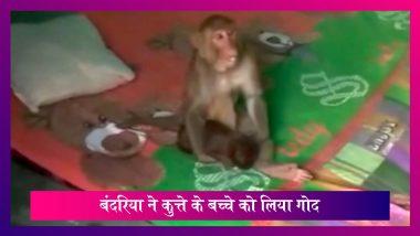 Haridwar में बंदरिया ने कुत्ते के बच्चे को लिया गोद