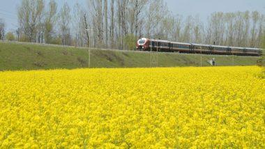 हरित क्रांति: देशभर में लहलहाएंगी फसल, रबी मौसम में किसानों ने की रिकॉर्ड बुआई