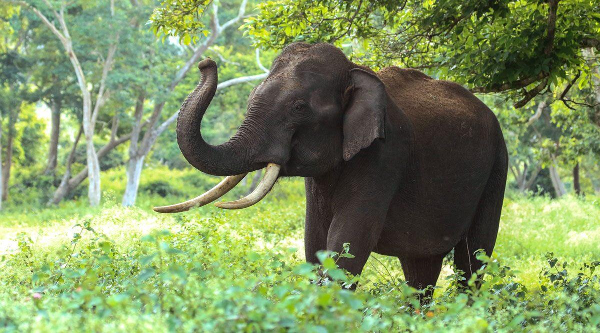 चीन: यौन उत्तेजना से बेकाबू हुआ हाथी, पर्यटकों के सामने चिड़ियाघर के एक रक्षक को बनाया शिकार (देखें वीडियो)