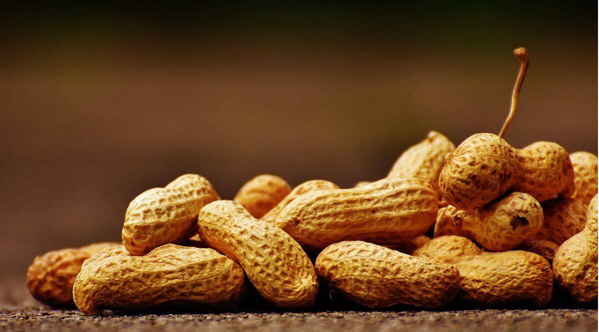 सर्दियों का पसंदीदा टाइमपास स्नैक है मूंगफली, जानिए ठंड में क्यों करना चाहिए इसका सेवन
