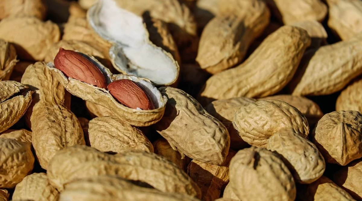 सर्दियों के मौसम में करें मूंगफली का सेवन, बीमारियां रहेंगी दूर और होंगे ये कमाल के फायदे