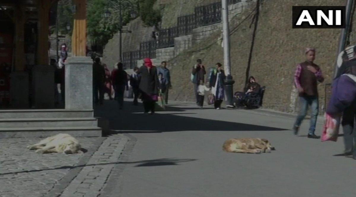 हिमाचल प्रदेश: शिमला नगर निगम का ऐलान- आवारा कुत्तों को अपनाने वाले लोगों को दी जाएंगी ये सुविधाएं