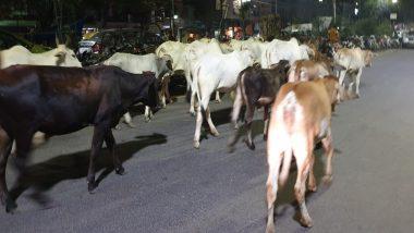 उत्तर प्रदेश: सियालदह राजधानी एक्सप्रेस से टकराई 15 गायें, 13 पैसेंजर ट्रेनें और दो मालगाड़ी विलंबित