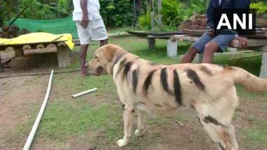 कर्नाटक: बंदरों के आतंक से फसल को बचाने के लिए किसान ने निकाला नायाब तरीका, अपने पालतू कुत्ते को बनाया टाइगर