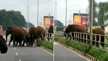 हाथियों के झुंड ने डिवाइडर तोड़कर पार की सड़क, हाइवे पर गाड़ियों को भी रोका, देखें वायरल वीडियो