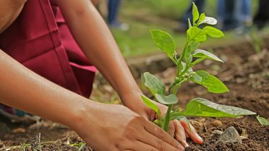 Uttar Pradesh Tree Plantation: यूपी ने शुरू किया वृक्षारोपण अभियान, एक दिन में 25.5 करोड़ पौधे किए