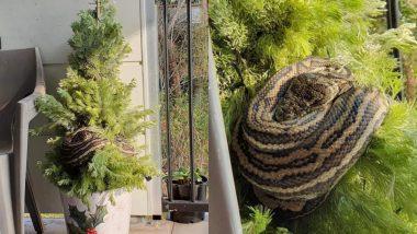 घर की बालकनी में रखे Christmas Tree से लिपटकर बैठा था 10 फुट का अजगर, महिला की उस पर पड़ी नजर और फिर...