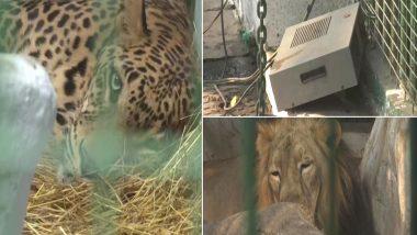 गुजरात: अहमदाबाद के कांकरिया चिड़ियाघर में जानवरों को ठंड से बचाने के लिए किए गए स्पेशल इंतजाम