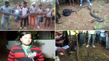 ओडिशा: पाइप में फंसे 6 विशाल अजगर निकाले गए, सबसे लंबा 18 फीट का, देखें वायरल वीडियो