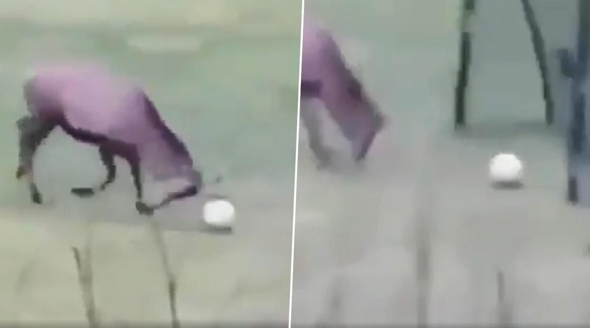 पार्क में फुटबॉल खेलता हुआ दिखाई दिया हिरण, गोल करने के बाद मनाया खुशी का जश्न, देखें वीडियो