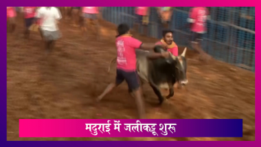 Jallikattu: Tamilnadu के Madurai में जलीकट्टू का खेल शुरू, 730 सांडों ने लिया हिस्सा