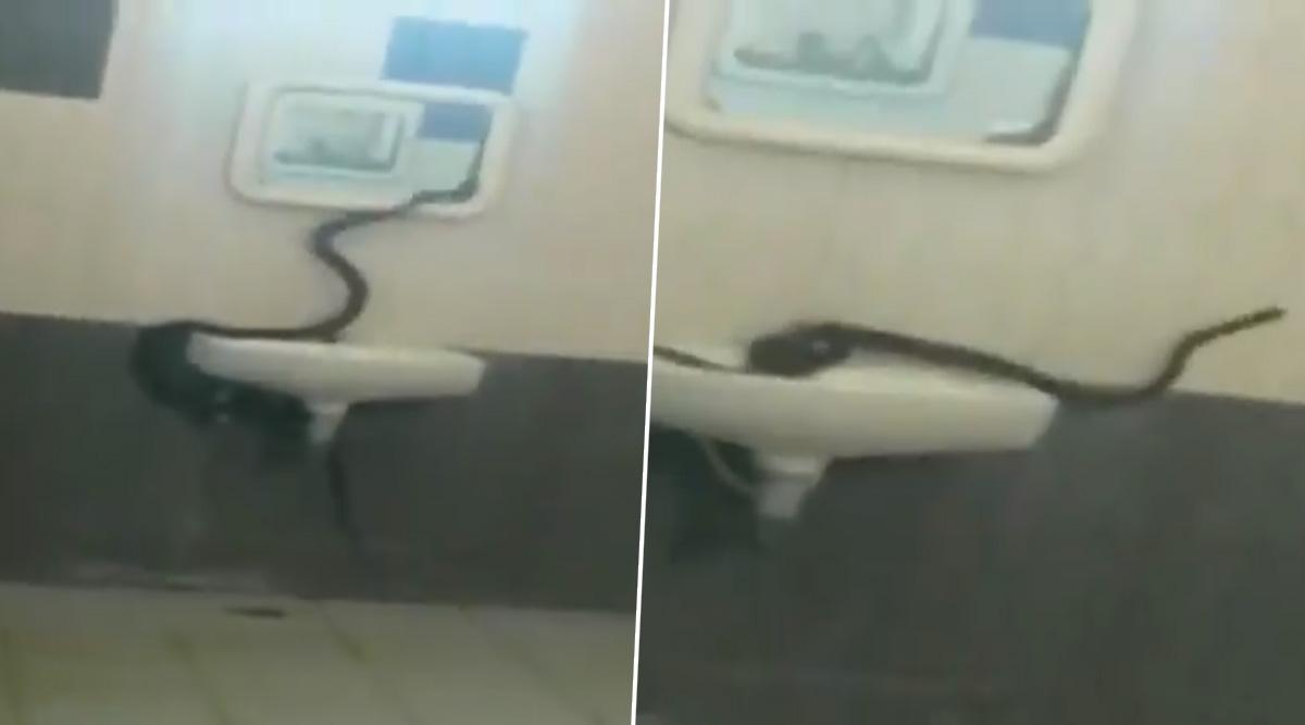 तमिलनाडु : भरथियार गर्ल्स यूनिवर्सिटी के हॉस्टल में घुसा जहरीला कोबरा सांप..फिर देखें VIDEO