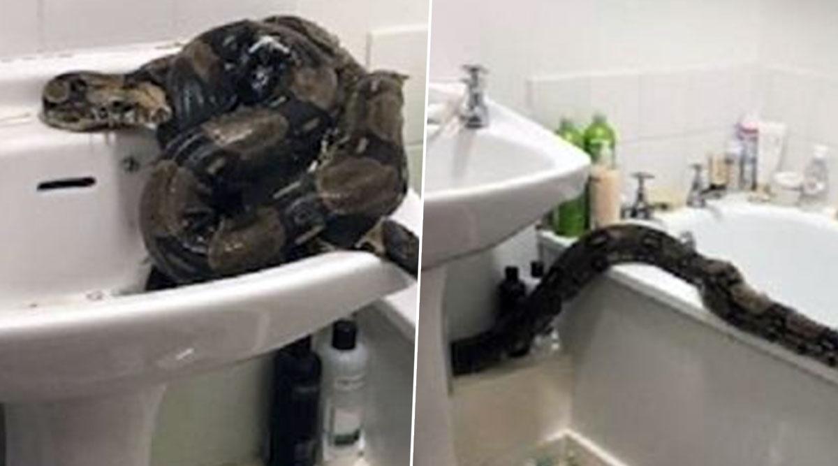 ब्रिटेन की महिला को अपने बाथरूम में मिला दुनिया का सबसे खतरनाक Boa Constrictor सांप, देखें डरावनी तस्वीरें